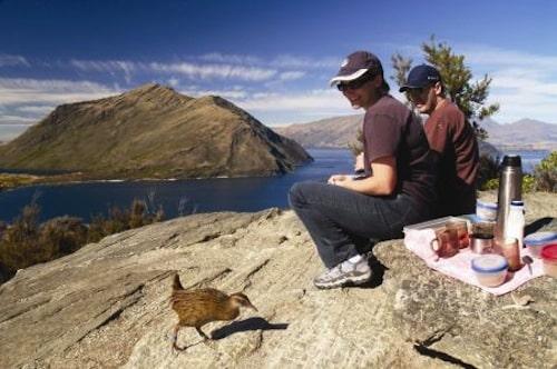 Beim Picknick in Neuseeland kann es durchaus vorkommen, dass eine Wekaralle zu Besuch kommt. Wekarallen sind flugunfähige Vögel, die endemisch nur in Neuseeland vorkommen. Foto: djd/Karawane Reisen