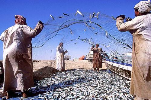 Die Fischer landen in den Morgenstunden ihren Fang direkt an der Mole des Marktes an. Foto: djd/Sultanate of Oman