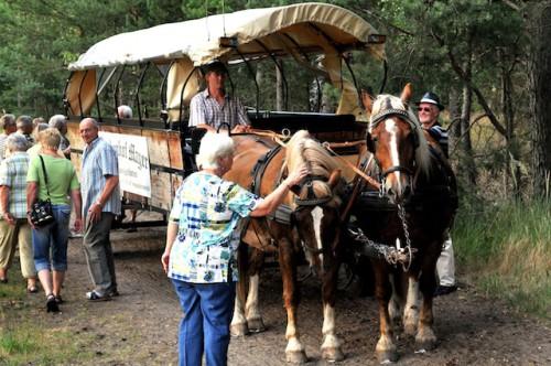 Ein Ausflug mit der Pferdekutsche ist nur eins von zahlreichen Freizeitangeboten in der Südheide Gifhorn. (Foto: epr/Südheide Gifhorn Tourismus)