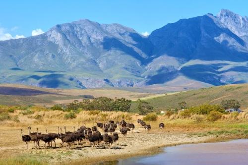 Die Natur Südafrikas bietet die perfekte Kulisse für einen traumhaften Urlaub. (Foto: epr/DeLaRe Reisen)