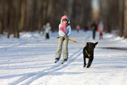 Girl on skis is going for a running dog.