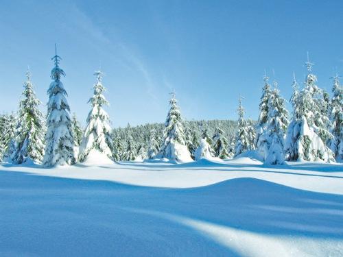 Eine Winterlandschaft wie aus dem Bilderbuch: Der Thüringer Wald beeindruckt mit seinen verschneiten Bergen und Tälern. (Foto: epr/Tourismus GmbH Oberhof)