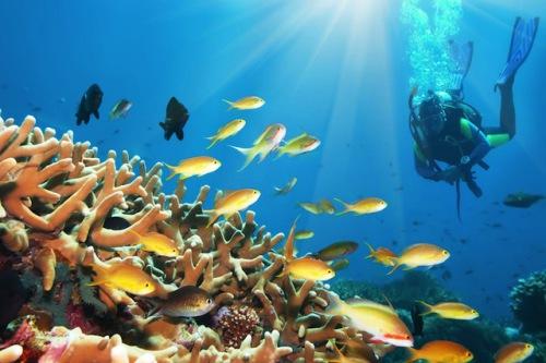 Die Karibik ist ein Paradies für Taucher. Foto: djd/Flughafen Hamburg/panthermedia
