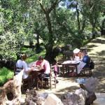 Im Olivenhain entfalten sich kreative Ausdrucksmöglichkeiten von alleine. Foto: djd/Inside Travel
