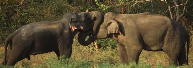 """Quelle: """"obs/Sri Lanka Tourism""""."""