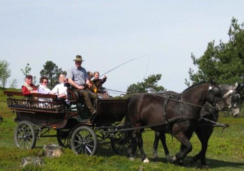 Foto: Mit der Pferdekutsche gemütlich durch Willingen und Umgebung