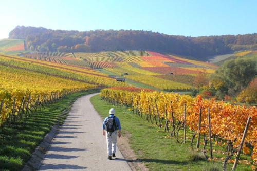 """Auf Themenwegen und anderen Wanderrouten können Aktivurlauber das """"Land der 1.000 Hügel"""" erkunden. Foto: djd/Kraichgau-Stromberg Tourismus e.V."""