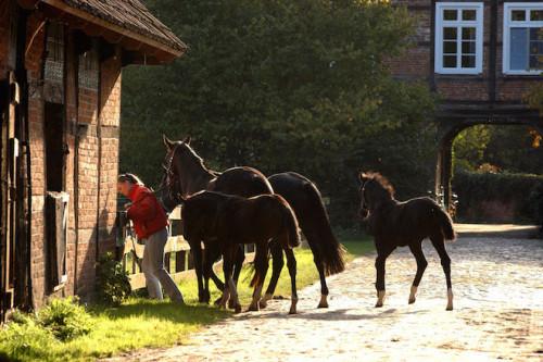 Auf dem Bauernhof kann man den ganzen Tag das Leben der Tiere begleiten. Foto: djd/TourismusMarketing Niedersachsen