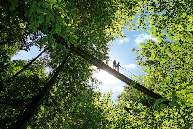 Majestätisch wirkende Laub- und Nadelwälder: Viele abwechslungsreiche Landschaften erwarten Wanderer auf dem Rothaarsteig. Foto: djd/Rothaarsteigverein e.V./K.P.- Kappest
