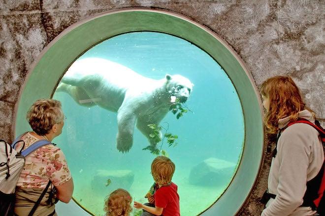 Die drei Eisbären Vitus, Nika und Larissa gehören zu den Publikumslieblingen des Karlsruher Zoos. Foto: djd/Stadt Karlsruhe