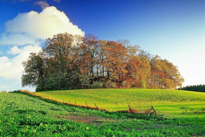 Der Oldenburger Wall ist im Herzogtum Lauenburg eine beliebte Adresse für Naturliebhaber - vor allem im Herbst, wenn sich von hier aus die Kraniche im Landeanflug auf den Oldenburger See beobachten lassen. Foto: djd/Herzogtum Lauenburg Marketing und Service GmbH/Thomas Ebelt