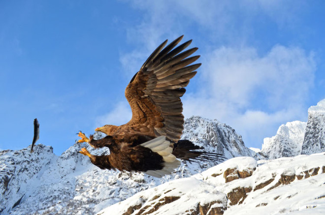 Hobbyfotografen kommen bei vielen Naturerlebnissen auf den Lofoten voll auf ihre Kosten. Foto: djd/FJORDTRA Reisebüro/Siv Myklebust
