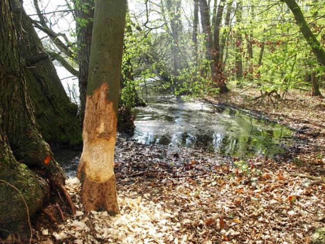 Foto: djd/www.angermuende-tourismus.de