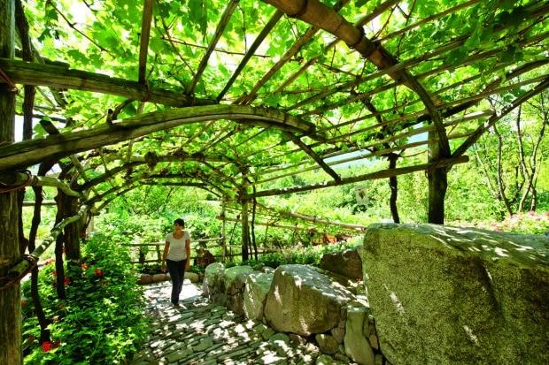 Foto: Die Gärten von Schloss Trauttmansdorff/akz-o