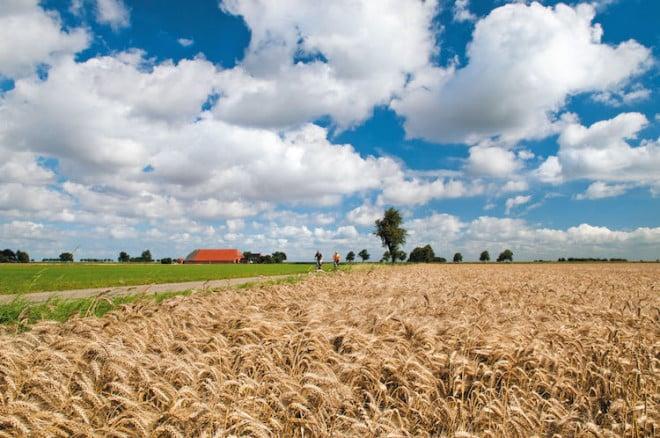 Schier endlose Weite - die einmalige ostfriesische Landschaft lässt Stress und Hektik vergessen. Foto: djd/Touristik GmbH Südliches Ostfriesland
