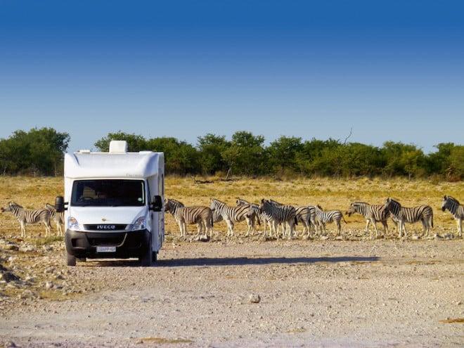 So nah und doch so sicher: Mit einem Wohnmobil kann man mit den Tieren des südlichen Afrikas auf Tuchfühlung gehen. (Foto: epr/SeaBridge)