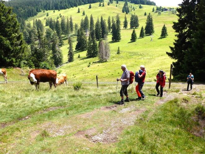 Deutschland Wandergruppe im Schwarzwald Raus aus den Schluchten auf die Berge! Foto: Wikinger Reisen