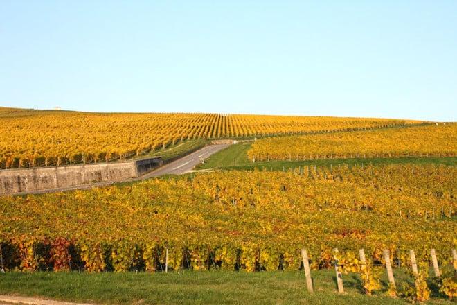 Die weiten Rebenflächen prägen das Landschaftsbild in der Champagne im Nordosten Frankreichs. Foto: djd/Delikatours