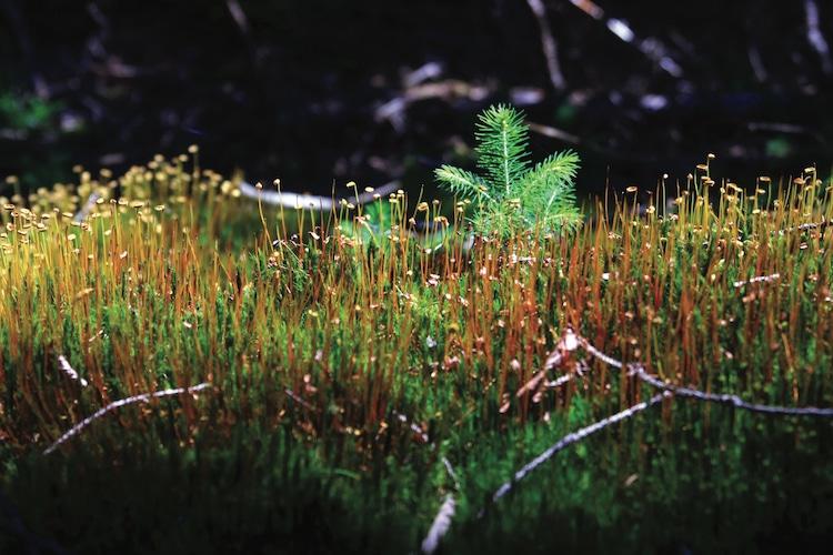 Lernen Sie das Naturjuwel Bayerischer Wald kennen. Foto: Tourismusverband Ostbayern e.V. / G. Dengler