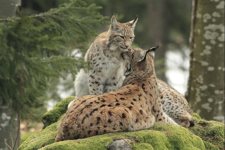 Die große Artenvielfalt im Naturpark Bayerischer Wald. Foto: Tourismusverband Ostbayern e.V.
