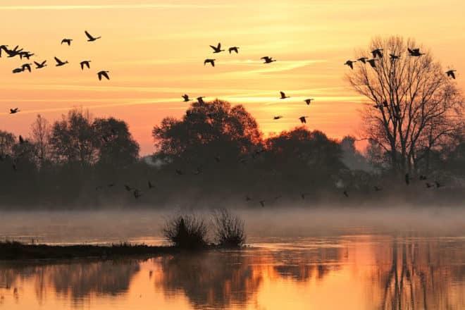 Die vielfältigen Naturräume und Landschaften entlang der Elbe sind zu jeder Jahreszeit ein Erlebnis - ganz besonders aber im goldenen Herbst. Foto: djd/Flusslandschaft Elbe/Mathias Schneider