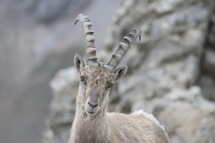 Foto: © Schweizerischer Nationalpark
