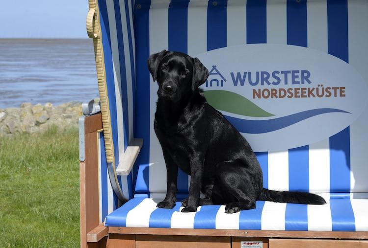 """An der Wurster Nordseeküste hat Hund sogar einen eigenen Feiertag: alljährlich im Juni feiert man hier den """"Tag des Hundes""""  © Kurverwaltung Wurster Nordseeküste"""