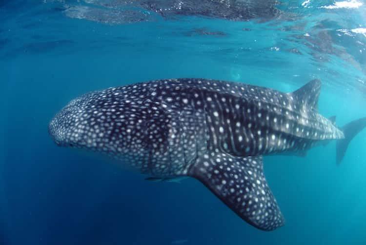 Foto: © Seychelles Tourism Board