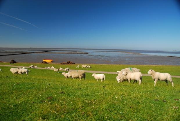©Foto: www.nordseetourismus.de / Lehner Foto