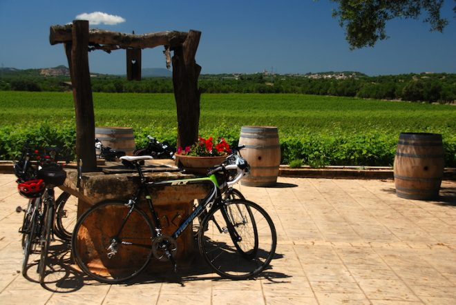 Die Balearen eignen sich hervorragend für den Weinanbau