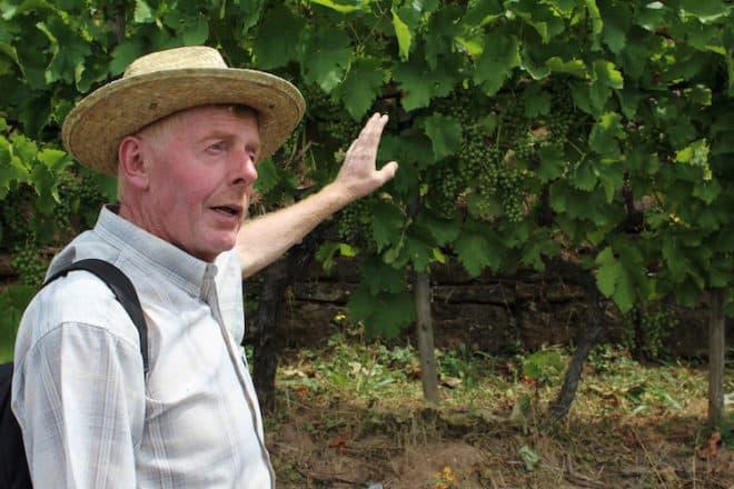 Reinhold Hillerich beantwortet im Weinberg auf dem fränkischen Rotwein Wanderweg geduldig jede Frage