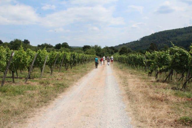 Auf dem fränkischen Rotweinweg von Bürgstadt nach Großheubach