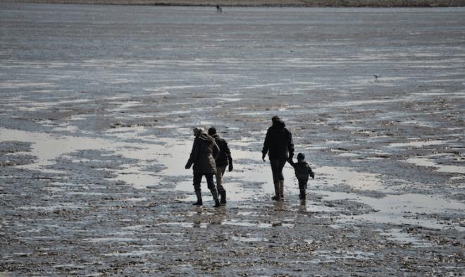 Bei einer Wattwanderunf an der Nordseeküste gibt es viel zu Entdecken