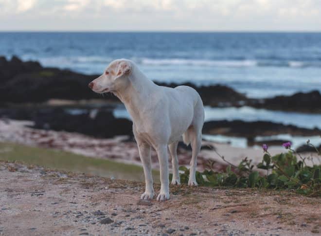 Wer im Urlaub Tierschutz betreiben möchte, sollte sich, zum Schutz der Tiere an Regeln halten.