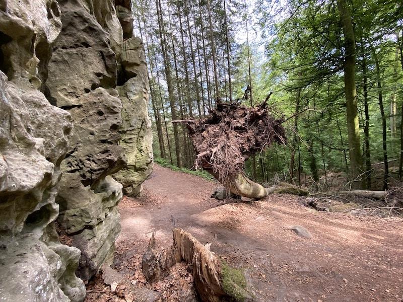 Umgestürzte Bäume in der Teufelsschlucht zeigen die wahren Naturgewalten
