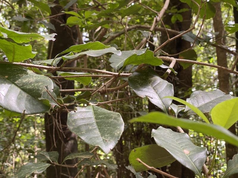 Der Wald im Nationalpark Garajonay besteht zum größten Teil aus Lorbeerbäumen
