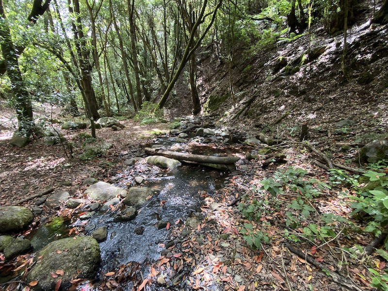 romantische Bäche durchließen den dichten Wald von La Gomera