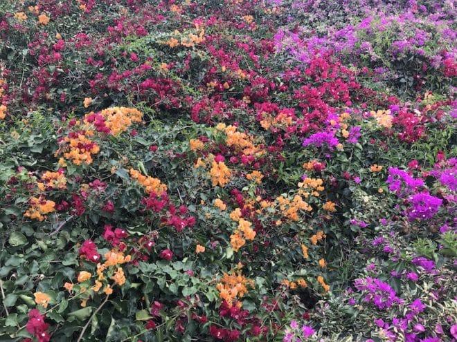 """Nicht umsonst heißt die die Insel Madeira auch die """"Blumeninsel"""""""