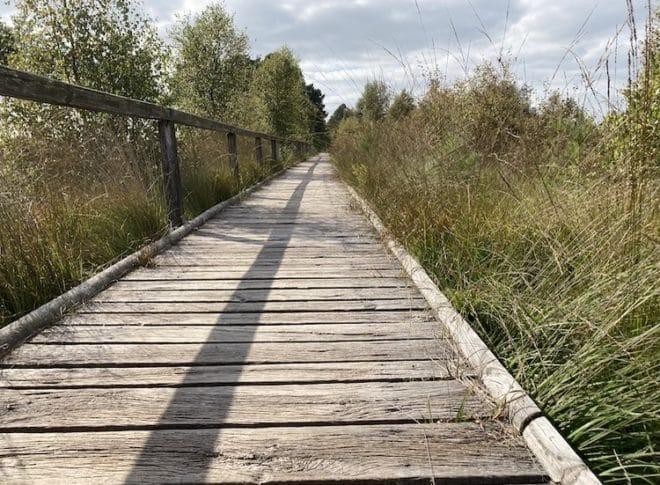 2021-09-08-Heide